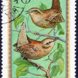 Forest birds stamp — Stock Photo #70773963