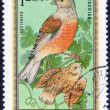 Forest birds stamp — Stock Photo #70773969