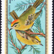Forest birds stamp — Stock Photo #70773971