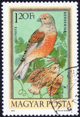 Forest birds stamp — Stok fotoğraf