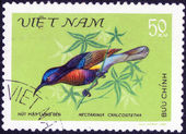 Stamp from Songbirds — Stock Photo