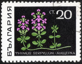 Spring flower stamp — Stock Photo