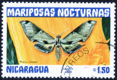 Stamp from Nocturnal Moths — Stock Photo