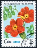 Stamp with rose flower — Stock Photo
