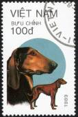 """Stamp shows """"Breeds dogs"""" — Stock Photo"""