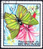 Stamp with Tropical Butterfly — Stock Photo