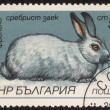 "Stamp with ""breeds of rabbits"" — Stock Photo #74468769"