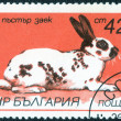 "Stamp with ""breeds of rabbits"" — Stock Photo #74468775"
