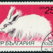"Stamp with ""breeds of rabbits"" — Stock Photo #74468779"