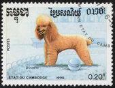 Марка с породы собак — Стоковое фото