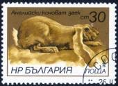 """Stamp with """"breeds of rabbits"""" — Zdjęcie stockowe"""