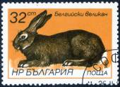 "Stamp with ""breeds of rabbits"" — Stockfoto"