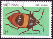 """Stamp shows a series of images """"Insects"""" — Stock Photo"""