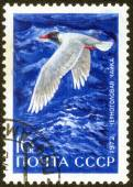 "Stamp with series of images ""Birds"" — Stock Photo"