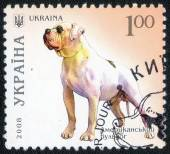 Stamp printed in Ukraine with dog — Stock Photo