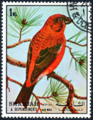 Stamp with forest bird — Stock Photo