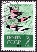 Stamp printed in the USSR — Stock Photo