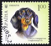 Razítko v Ukrajině — Stock fotografie
