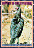 Stamp printed in Equatorial Guinea — Stock Photo