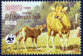 Stamp printed by Cambodia — Stock Photo