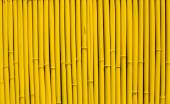 Bamboo sticks arranged in a row — Stock Photo