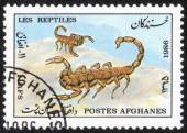 Stamp printed in the Afghanistan — Stockfoto
