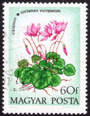 Postage stamp printed in Hungary — Stock Photo