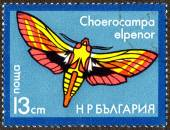 Stamp printed in Bulgaria shows Butterfly — Stock Photo
