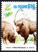 Stamp printed in Poland ,Bison — Stock Photo