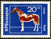 Stamp printed in Bulgaria ,domestic animal — Stock Photo
