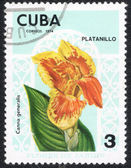 Garden flowers stamp printed in  CUBA — Stock Photo