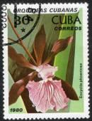 Stamp printed in  CUBA, Garden flower — Stock Photo