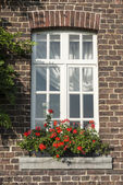 Windo in old wall with french geranium flowers — Stockfoto