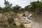 Landscape with river in kruger national parc — Stock Photo