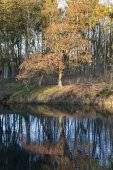 Autumn nature in holland — Zdjęcie stockowe