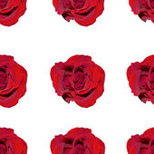 Seamless texture from red roses. — Stock Photo