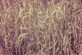 Abstract background from a grass stylized semi-antique. — Stock Photo
