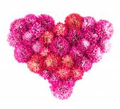 Chrysanthemums flowers heart — Stock Photo