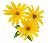 Yellow flowers close-up — Stock Photo