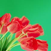 Red tulips on a blurry background — Stock Photo