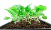 Young seedlings close up — Stock Photo