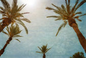 Branches of palms under blue sky — Stock Photo