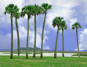 Amelia island, floryda — Zdjęcie stockowe
