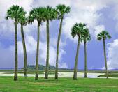 Amelia island, florida — Stockfoto