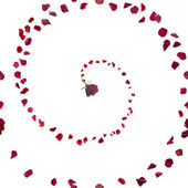 Rose Petal Spiral — Stock Photo