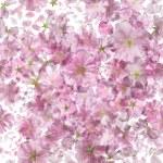 Bright Sakura Pattern — Stock Photo #75226147