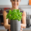 Closeup on young housewife showing fresh basil — Stock Photo #64452939