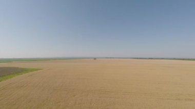 Barley field viewed from air - front view, hovering in higher altitude HD — Stock Video