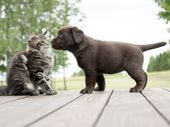 Dog cat owner — Stock Photo