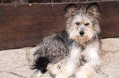 Adorable shaggy dog — Stock Photo